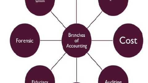 شاخه های رشته حسابداری